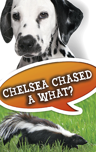 Chelsea Chased a What?