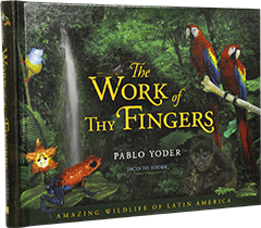 The Work of Thy Fingers by Pablo Yoder